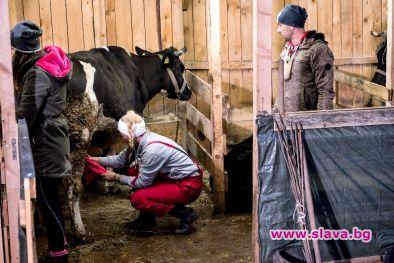 Кунг-Фу крава стряска Фермата