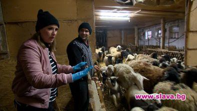 Йоана Захариева - Йоко пее пред 300 овце на село