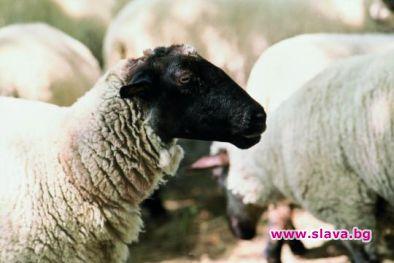 БАБХ не само убива животните, но и държавността, сече 4 лапи
