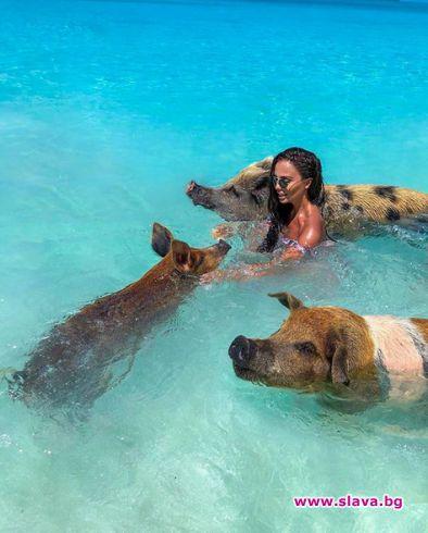 НиЛо плажува с прасета
