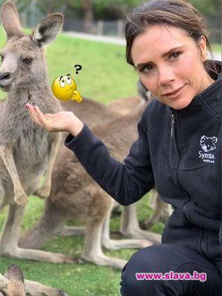 Виктория и Дейвид се забавляват в Австралия