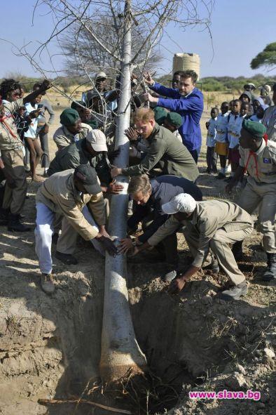 Принц Хари посади баобаб в Ботсвана